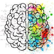Onze hersenen vormen zich naar onze ervaringen 3