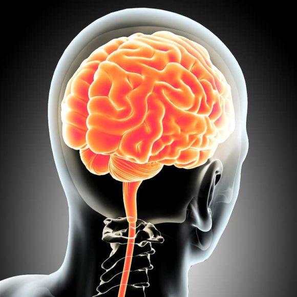 Hersenen heb je om te overleven.