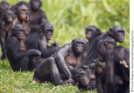 Tweespraak – Psychotherapeut Rob van Boven en psycholoog Luuk Mur praten over ……….Bonobo plus.